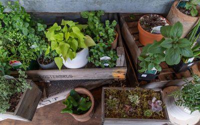 Confinement : commencer son potager à 0€ et sans jardin !